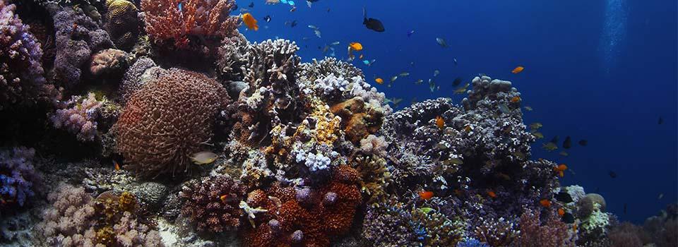 Tagestour ab Brisbane zum Korallenriff